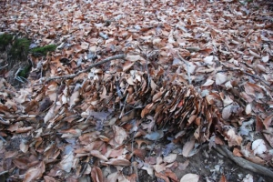 What made this pile of leaves?