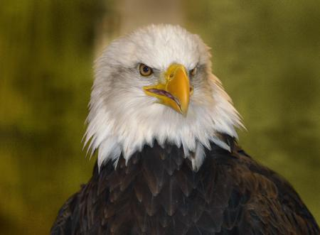 Eagle Watches are among the most popular programs in Arkansas State Parks during the winter.