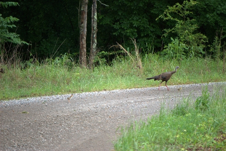 Wildlife abounds at Mississippi River State Park