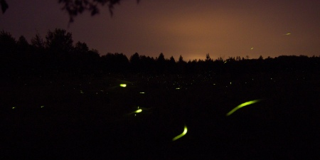 A field of lights, photo by gmnonic.
