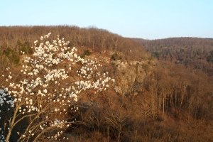 Serviceberry dots the mountain.