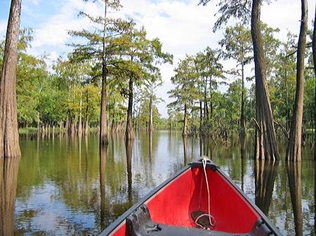 Canoeing Moro Creek.